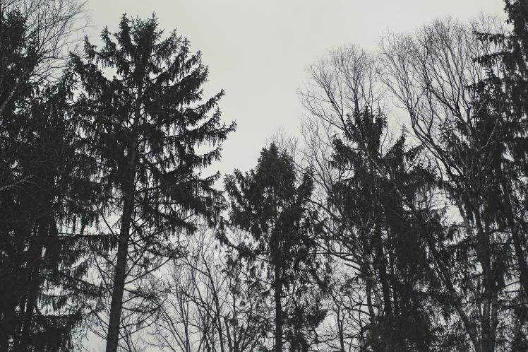 treesweb